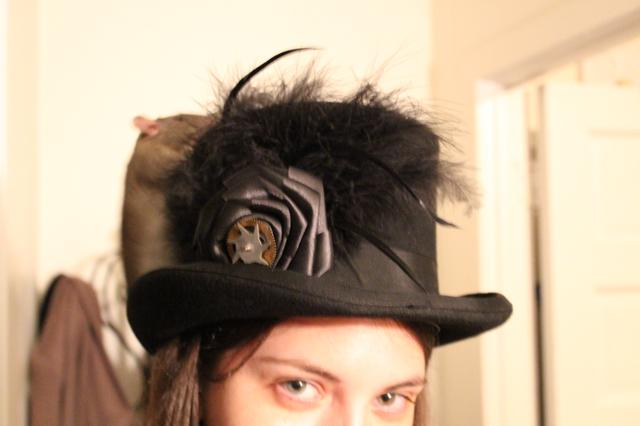 Image for Clove on Morgan's hat