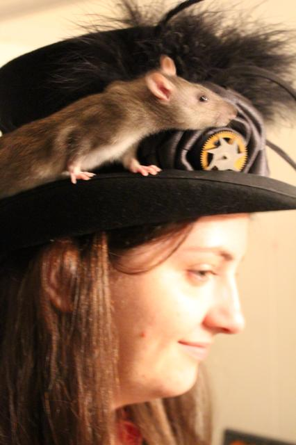 Image for Clove on Morgan's hat, profile view