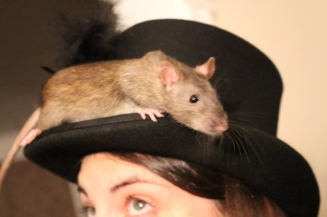 Image for Clove on Morgan's hat, again